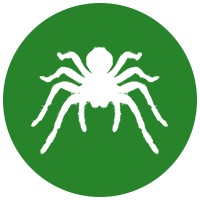 white spider logo